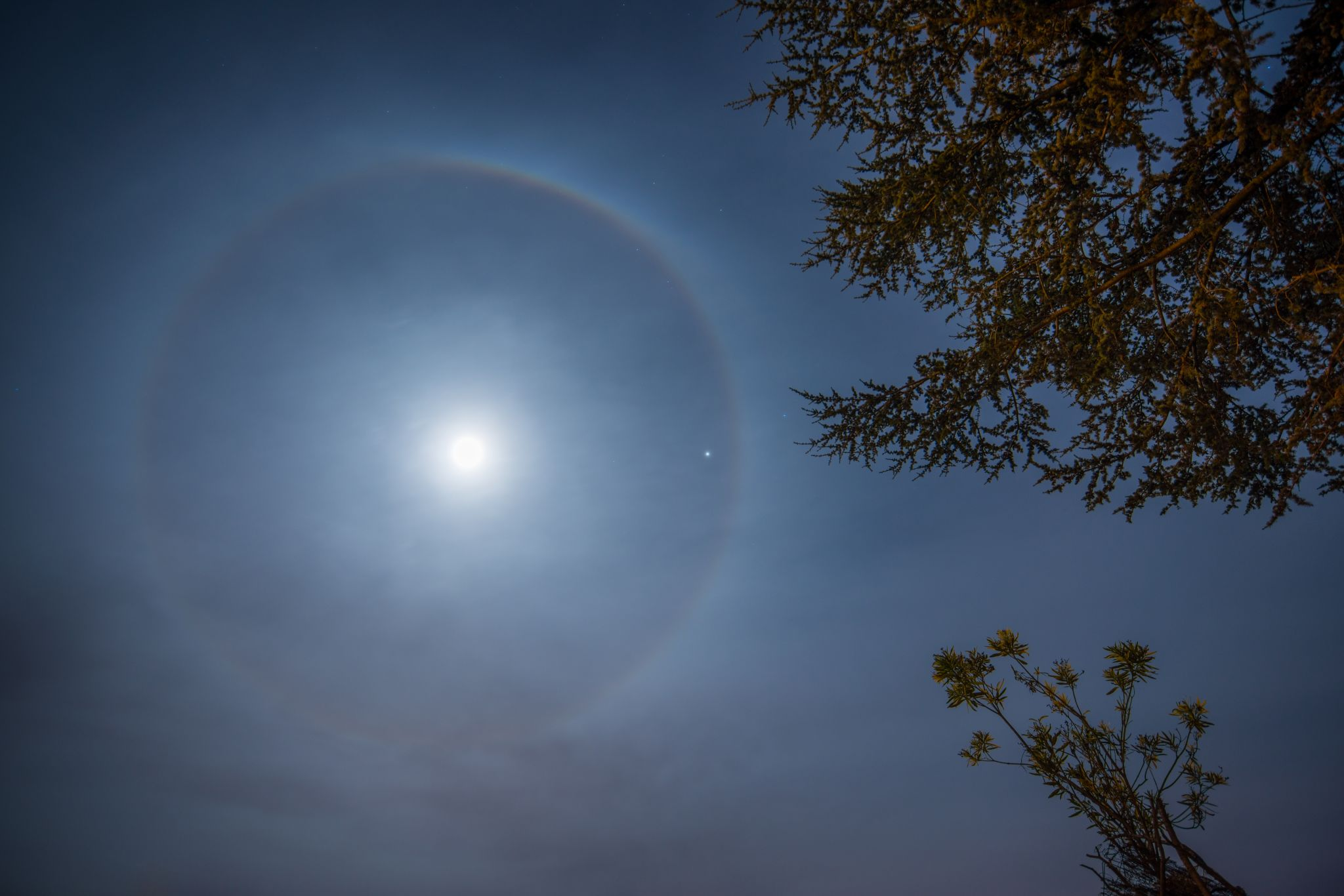 Have you seen a wonderful aura around the moon recently?  Here's why.