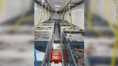 Dr. Colin & amp;  The sons' shipment of more than 200,000 dollars of seafood destined for France.  The company has lost more than 90% of its revenue since the post-Brexit trading arrangement went into effect.