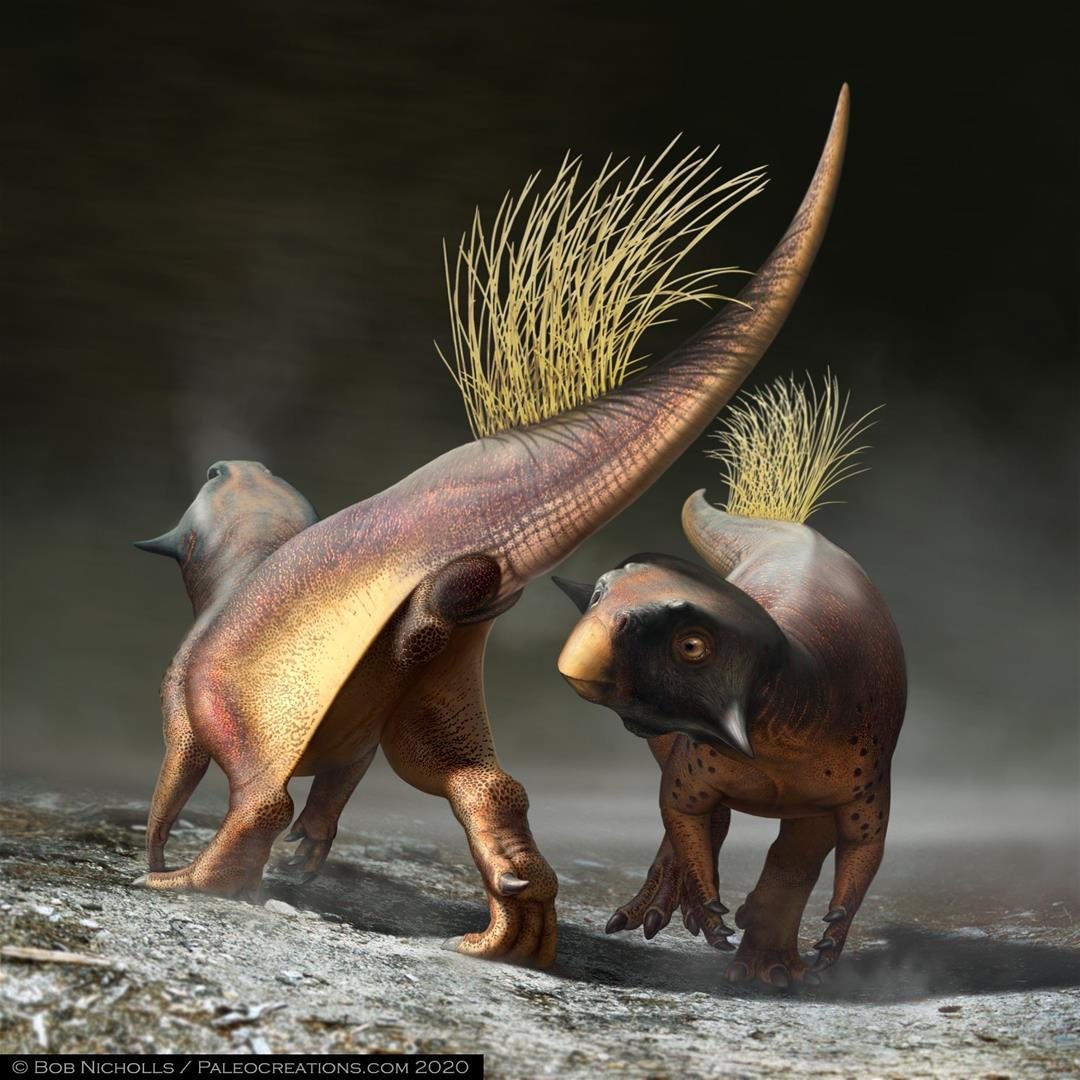 Paleontologists gain insight into a dinosaur's stern